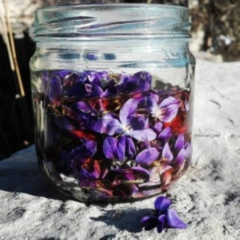 fitomon mel violetes