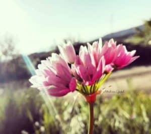 fitomon all rosa blog