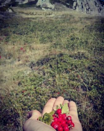 fitomon-fruits-silvestres-blog